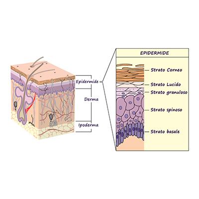 strati della pelle